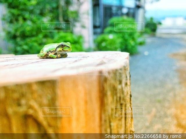置物みたいなカエルさんの写真・画像素材[2266658]