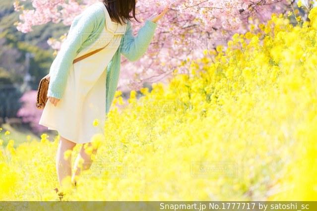 桜と菜の花と女の子の写真・画像素材[1777717]