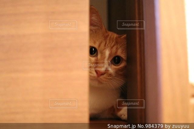 ドアの隙間からの写真・画像素材[984379]