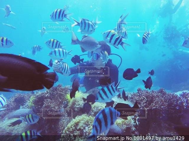 水面下を泳ぐ魚たちの写真・画像素材[1001497]