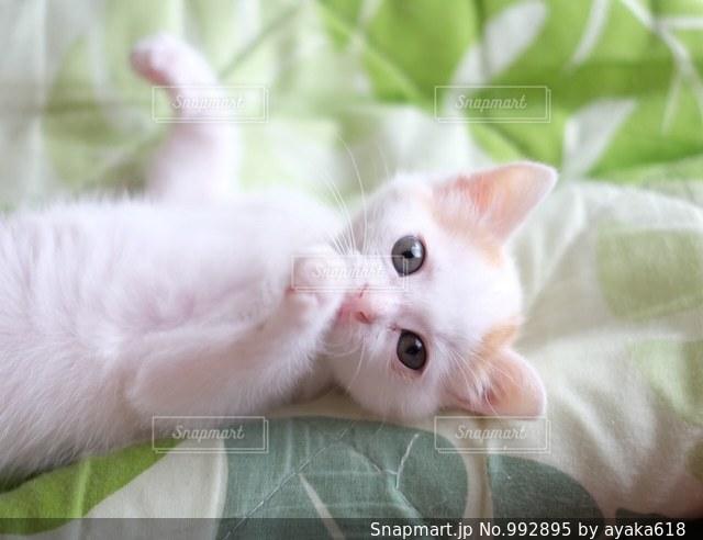 ベッドの上で横になっている猫の写真・画像素材[992895]