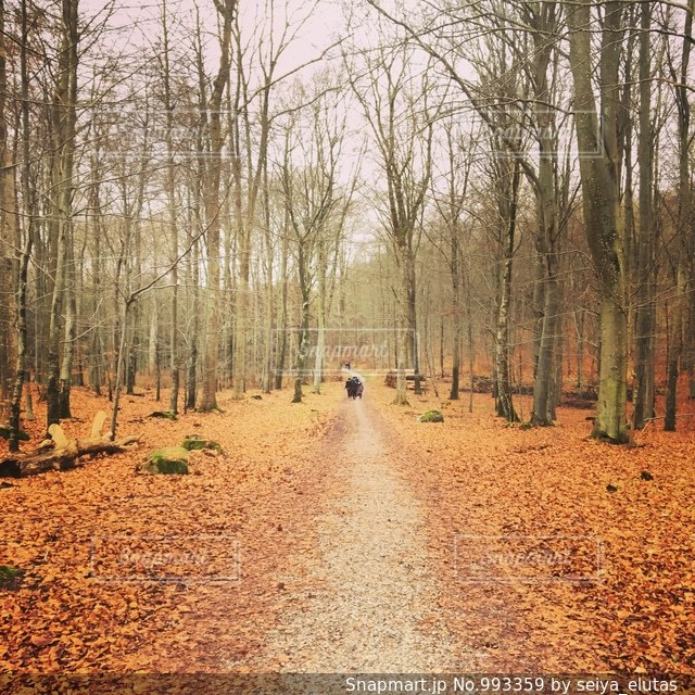 デンマークの自然の写真・画像素材[993359]