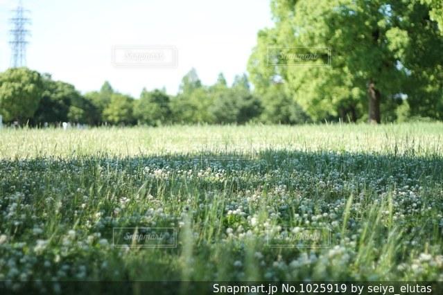 朝の公園の写真・画像素材[1025919]