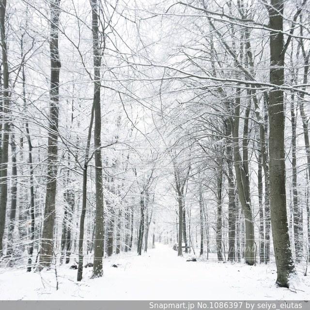 デンマークの雪景色🇩🇰の写真・画像素材[1086397]