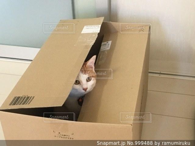 箱の中の猫の写真・画像素材[999488]