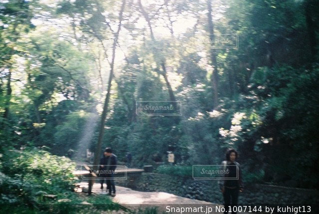 散策の写真・画像素材[1007144]