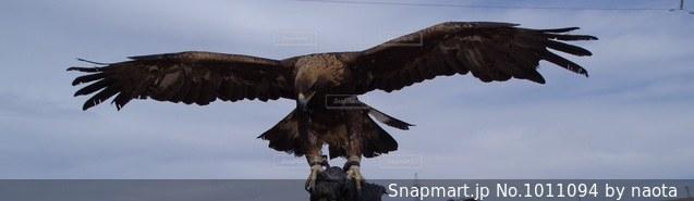 羽ばたいている鳥の写真・画像素材[1011094]
