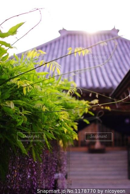 夕暮れの田舎のお寺の写真・画像素材[1178770]