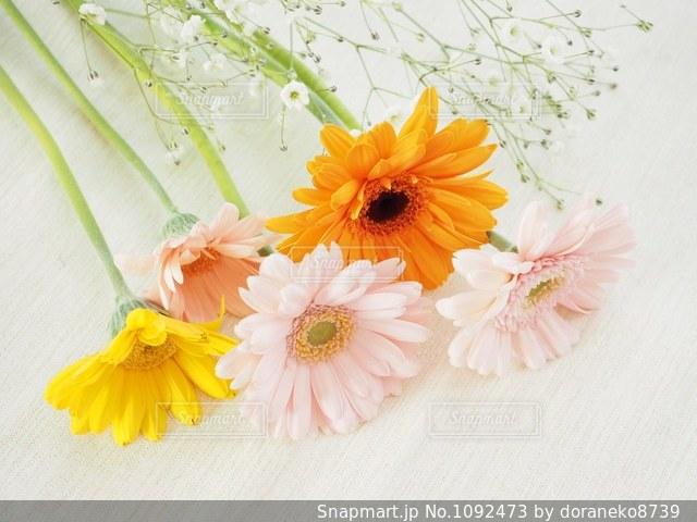 春色の花たちの写真・画像素材[1092473]