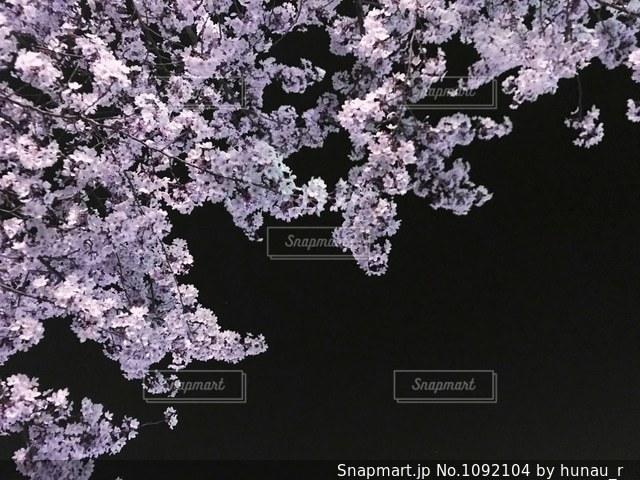 近くの花のアップの写真・画像素材[1092104]