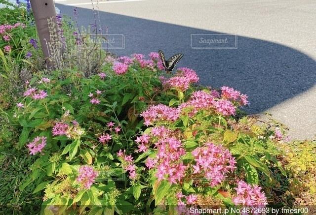 秋の花と蝶の写真・画像素材[4872693]