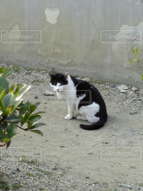 猫の写真・画像素材[121807]