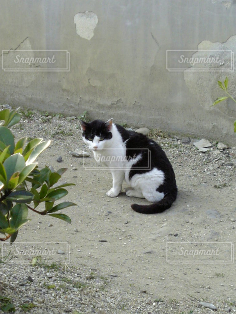 猫 - No.121807