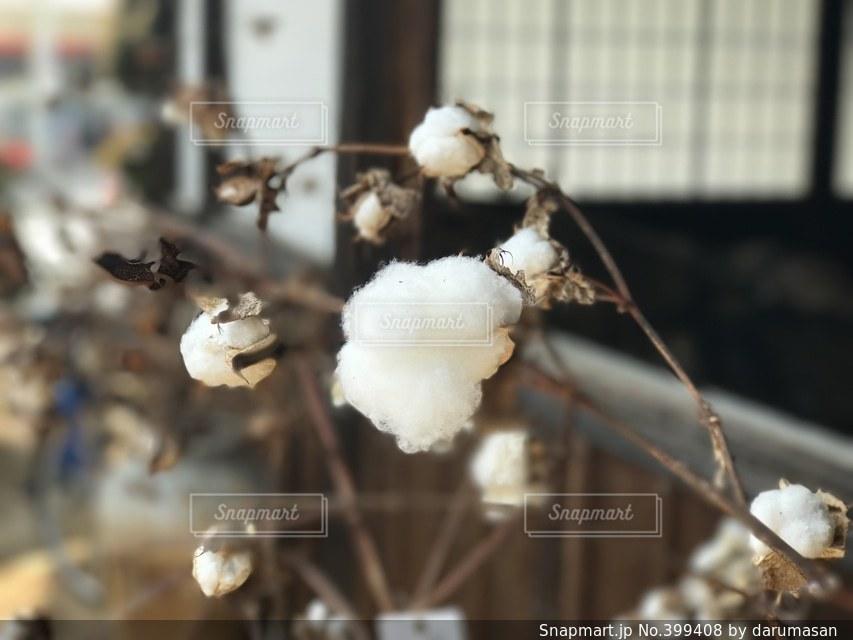 白 - No.399408