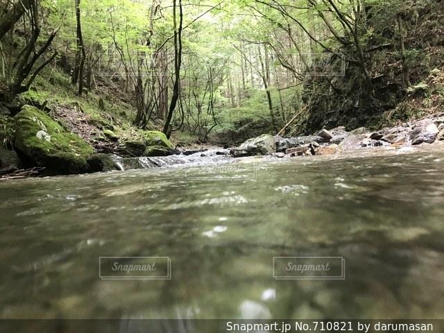 森を流れる川の写真・画像素材[710821]
