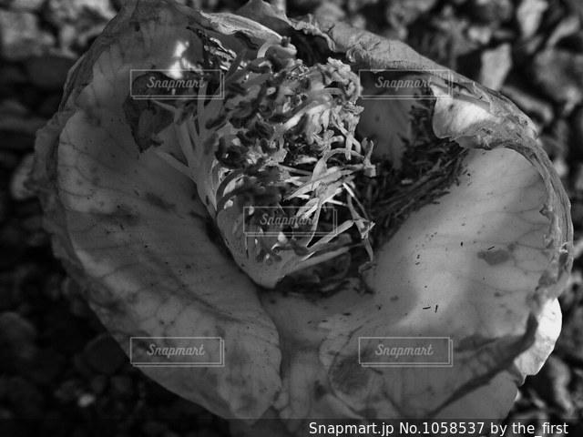 朽ちるの写真・画像素材[1058537]