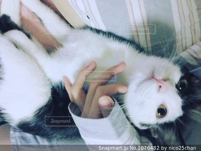猫を抱く人 - No.1076482