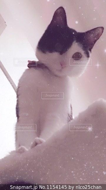 見下ろす猫の写真・画像素材[1154145]