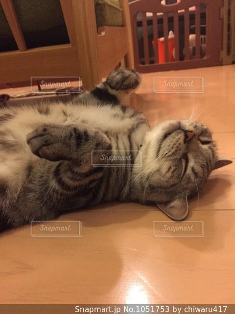 くつろぐ猫の写真・画像素材[1051753]