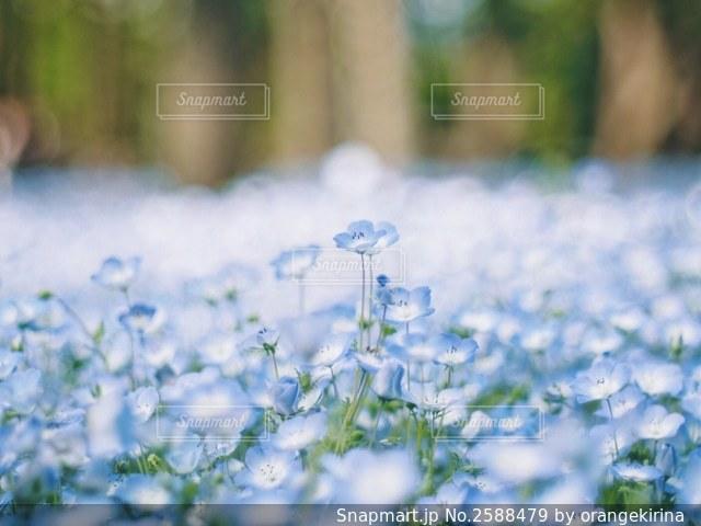 自然の写真・画像素材[2588479]