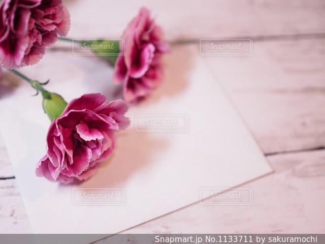 紫のカーネーションの写真・画像素材[1133711]