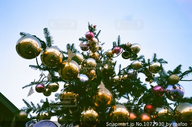 クリスマスツリーの写真・画像素材[1072930]