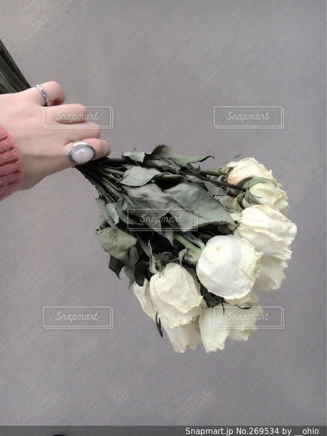 花の写真・画像素材[269534]