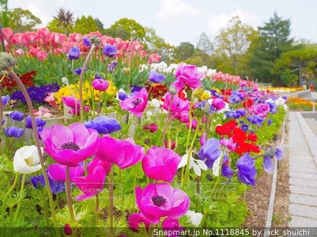 お花畑の写真・画像素材[1118845]