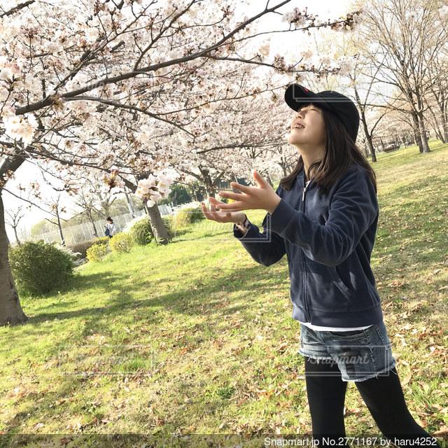桜舞うの写真・画像素材[2771167]