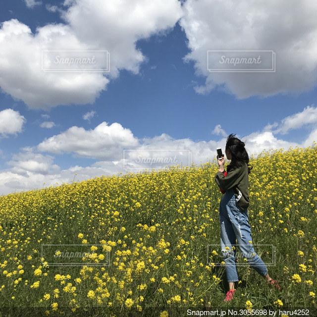 菜の花土手の写真・画像素材[3055698]