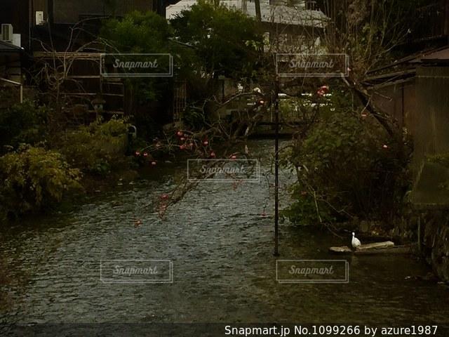 冬の川の写真・画像素材[1099266]