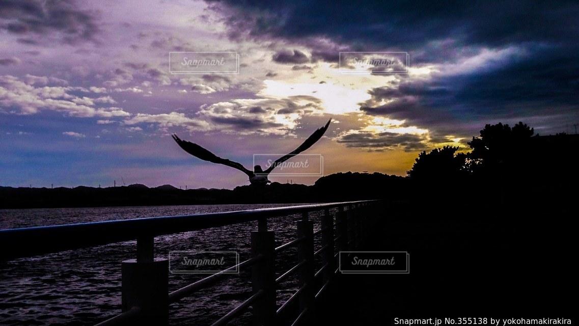 海,鳥,夕方,八景島,横浜市,ヨコハマ