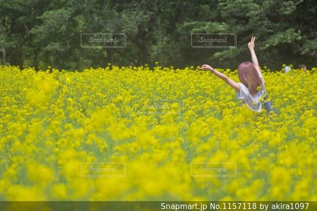 昭和記念公園 菜の花と女の子の写真・画像素材[1157118]
