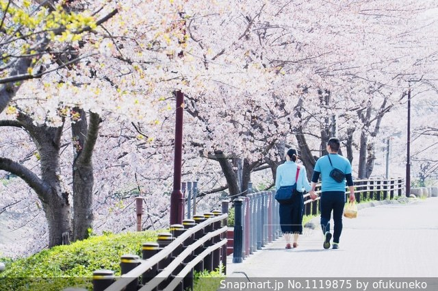 桜並木の下をデートするカップルの写真・画像素材[1119875]