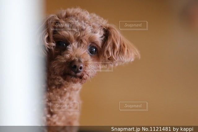 近くに犬のアップの写真・画像素材[1121481]