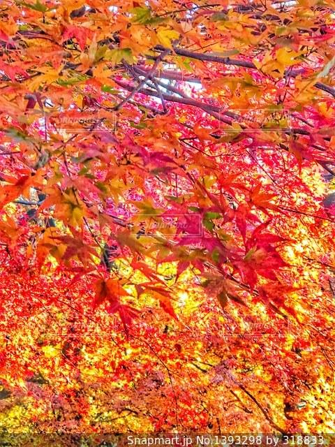 秋の写真・画像素材[1393298]