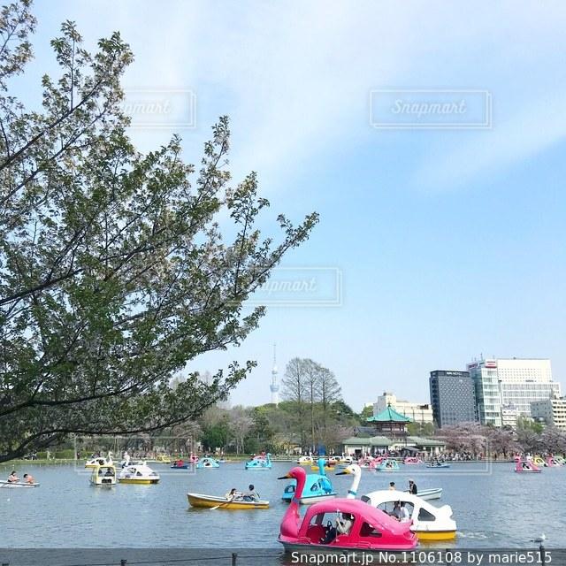 池の小さなボートと東京スカイツリー(R)の写真・画像素材[1106108]
