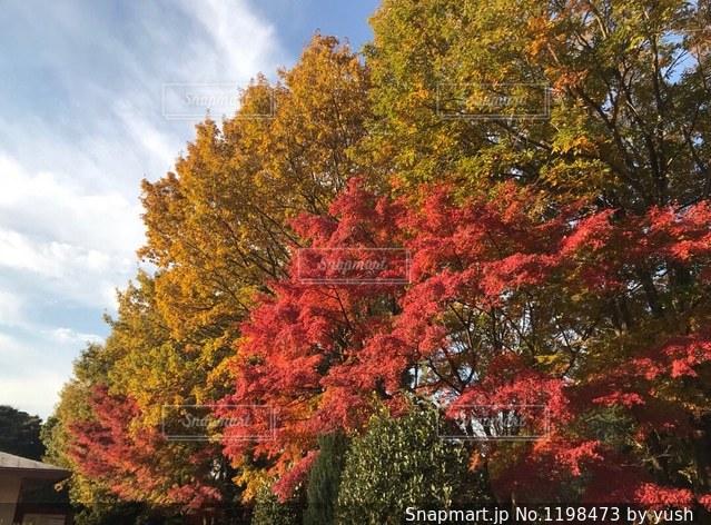 色とりどりの紅葉の写真・画像素材[1198473]