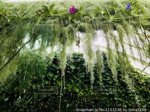 ニューヨーク植物園内の温室の写真・画像素材[1151536]