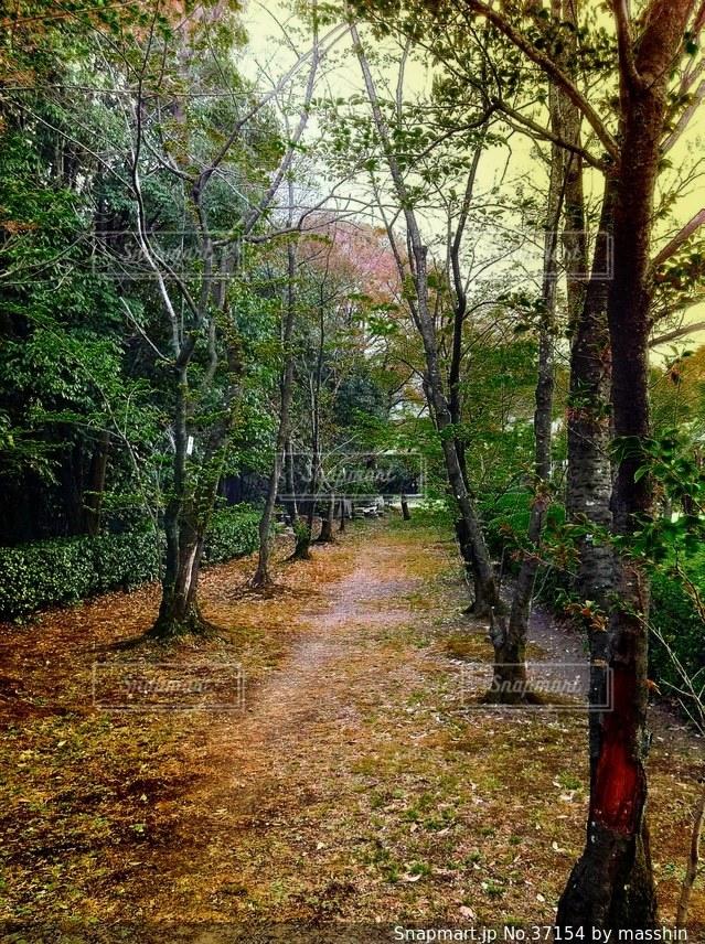 自然の写真・画像素材[37154]