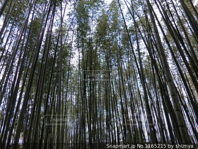 古都を感じる竹林の写真・画像素材[1165215]