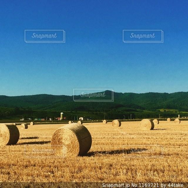 牧草ロールの写真・画像素材[1169721]