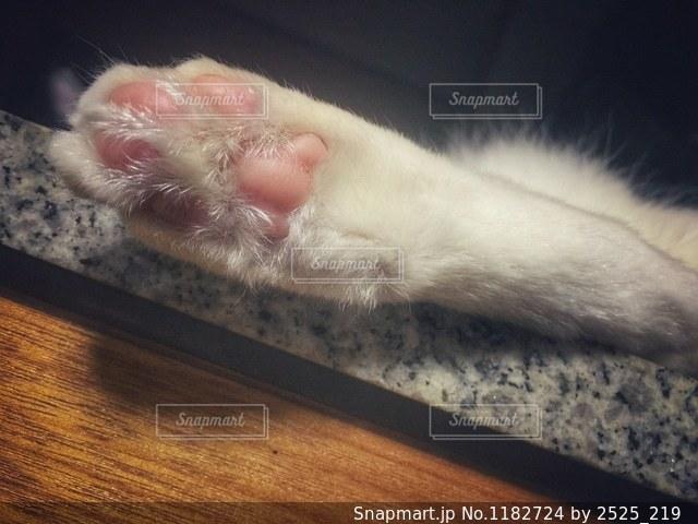 猫の写真・画像素材[1182724]