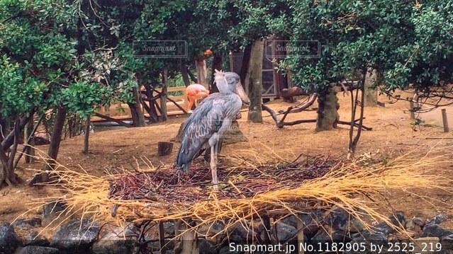 動物の写真・画像素材[1182905]