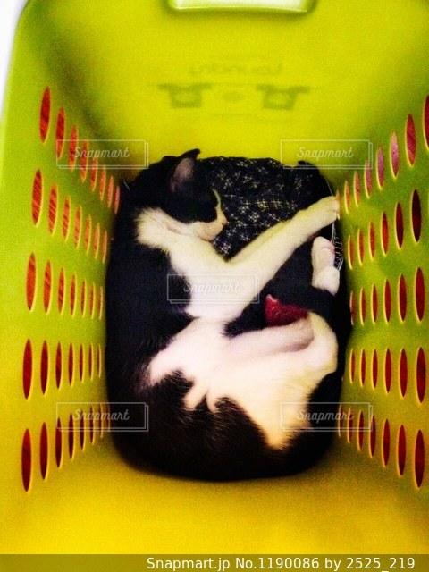 猫の写真・画像素材[1190086]