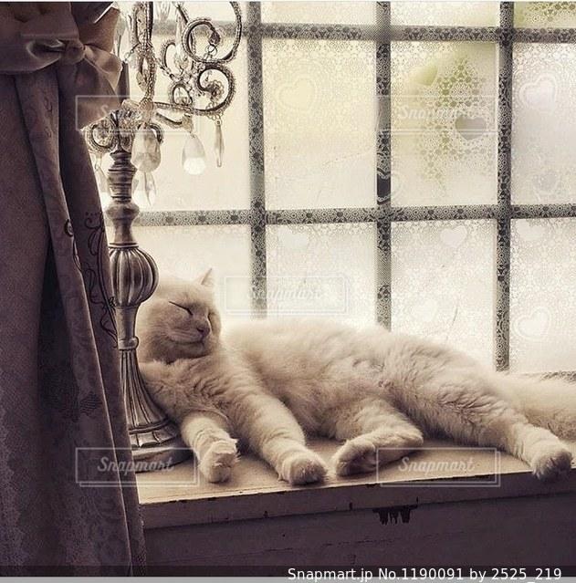 猫の写真・画像素材[1190091]