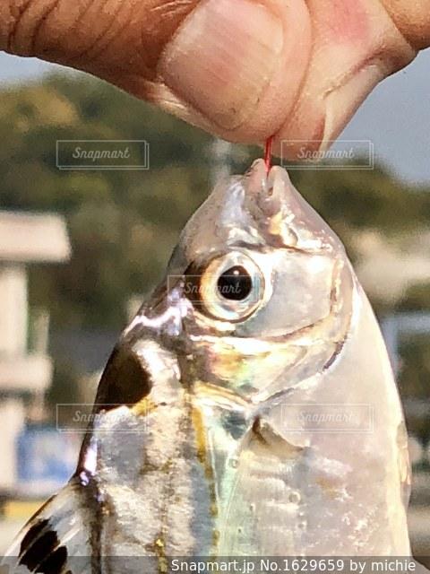 近くに魚のアップの写真・画像素材[1629659]
