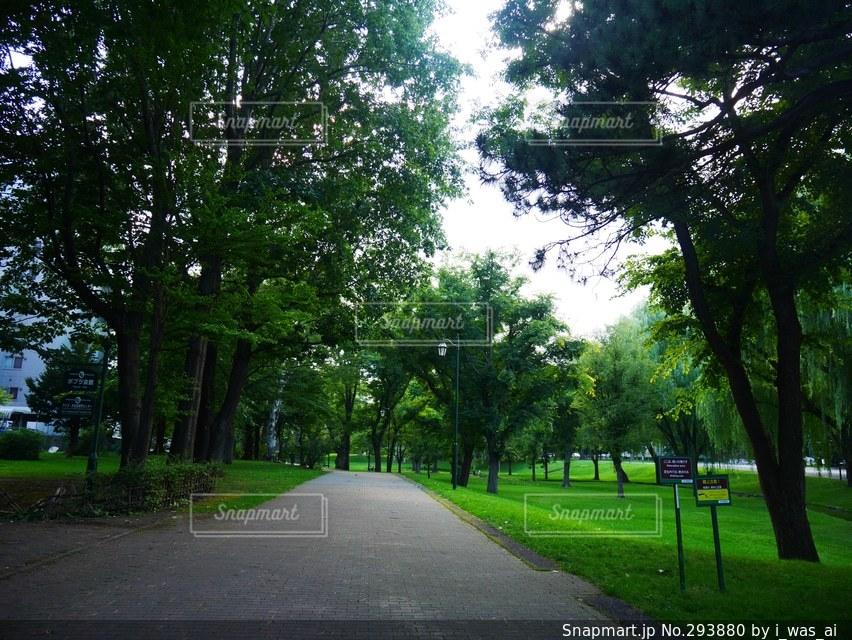 自然の写真・画像素材[293880]