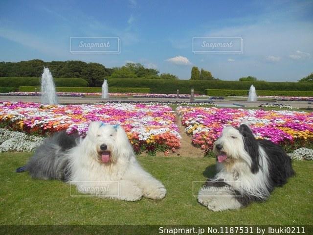 春の花綺麗💐の写真・画像素材[1187531]