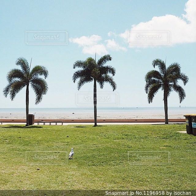 芝生のフィールドでヤシの木の写真・画像素材[1196958]